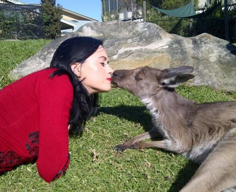 Katy Perry kisses a Kangaroo in an Australian zoo