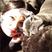 Image 8: Jessie J with her pet dog