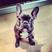 Image 3: Jessie J's dog Jackson