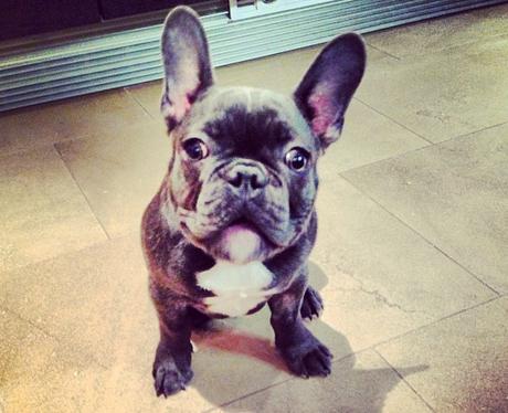 Jessie J's dog Jackson