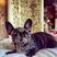 Image 8: Lsdy gaga wearing a dog mask
