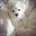 Image 7: Demi Lovato Dog Buddy