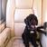 Image 5: Dog Sirius