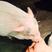 Image 10: Miley Cyrus kissing a pig