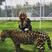 Image 2: Khloe Kardashian Tiger