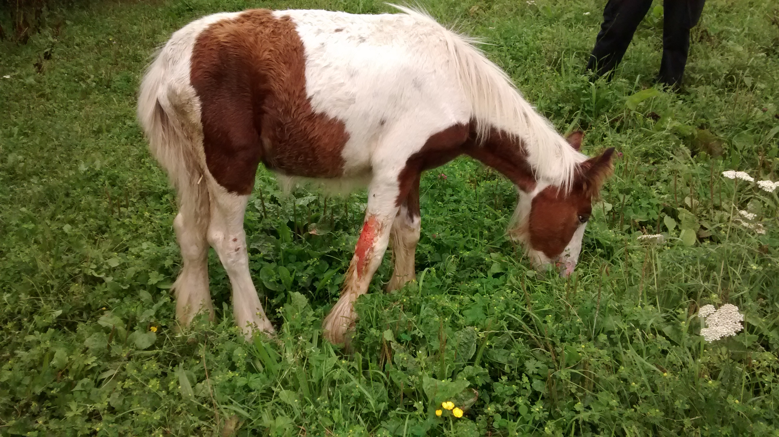 foal set on fire in Derbyshire