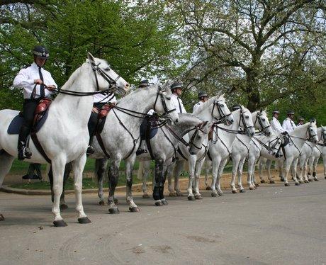 grey horses