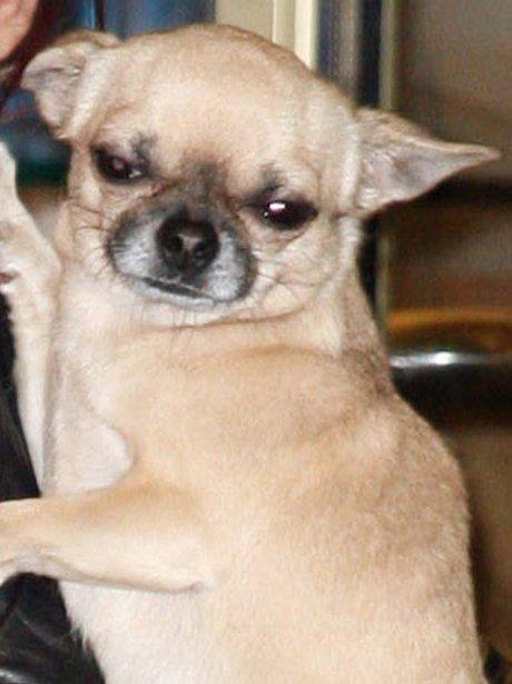 Cheryl Cole's dog