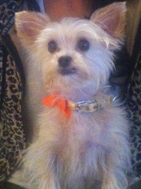 Rochelle Wiseman's Dog
