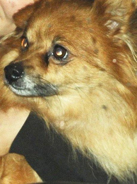 Tulisa's Dog