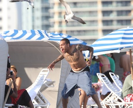 Chris Brown attacked by seagulls