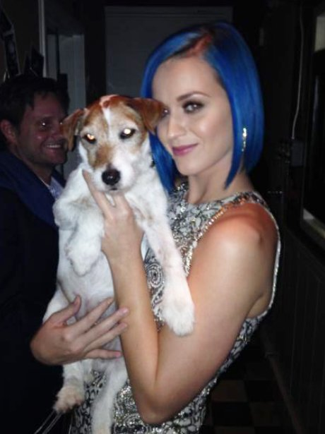 katy Perry with Uggie