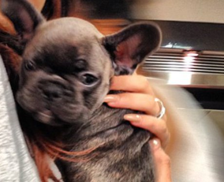 Cher Lloyd's Dog