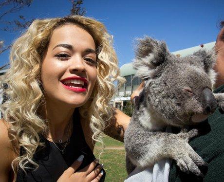 Rita Ora with a Koala