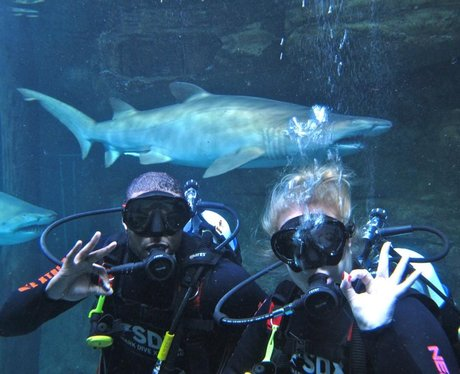 JB from JLS swimming with sharks