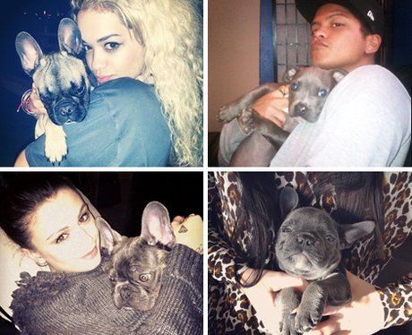 Pops Stars With Their Dogs