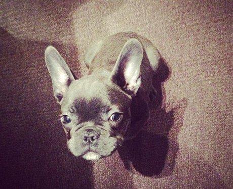 Jessie J's dog