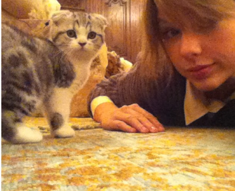 Taylor Swift shares a picture of her pet kitten