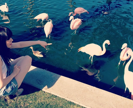 Carly Rae Jepsen meets some flamingos in Palm Springs