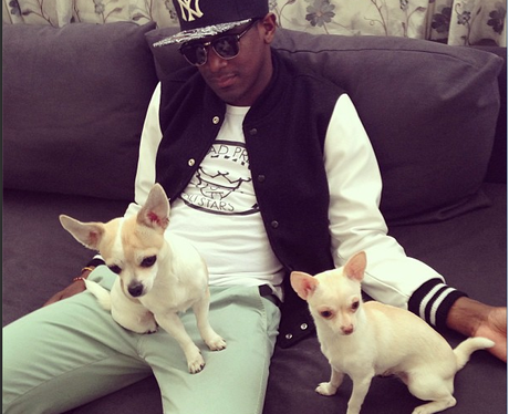 Labrinth with two dogs
