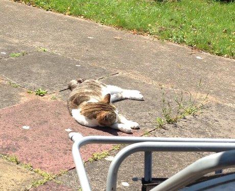 cat lying in the sun