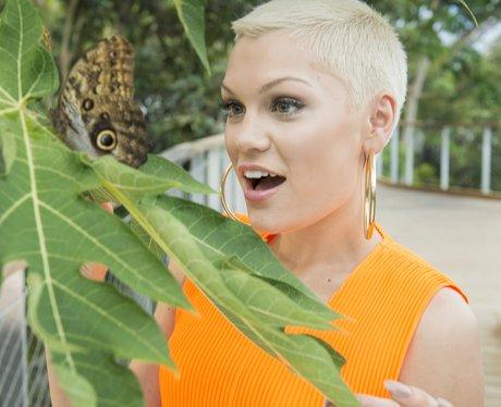 Jessie J Eden Paroject