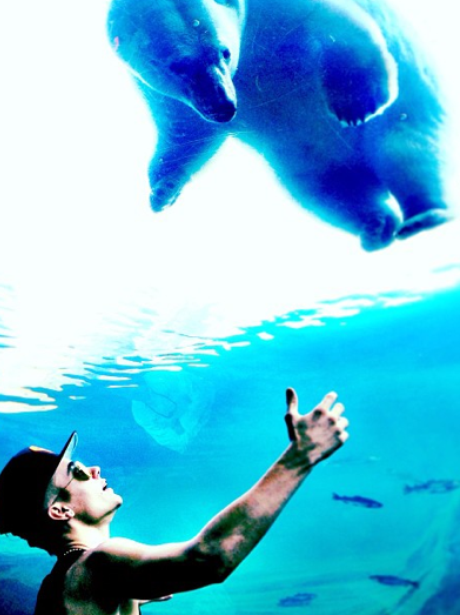 Justin Bieber Polar Bear
