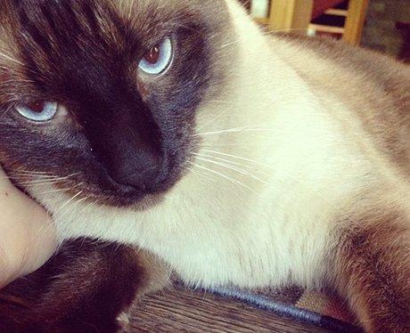 Kesha's cat on instagram