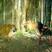 Image 10: Katy Perry 'Roar'