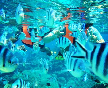 Jason Derulo snorkeling