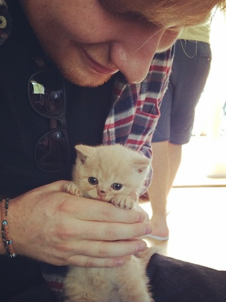 Ed Sheeran with a kitten