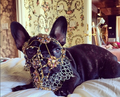 Lsdy gaga wearing a dog mask