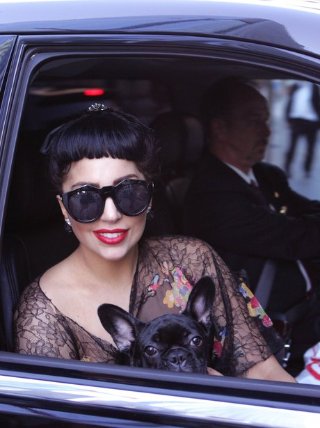Lady Gaga spotted in Toronro with a small dog.