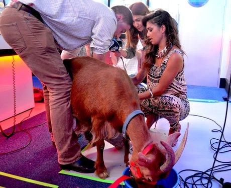 Nicole Scherzinger Milking A Goat On Capital Break