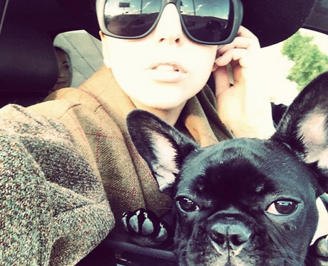 Lady Gaga and her dog on Instagram