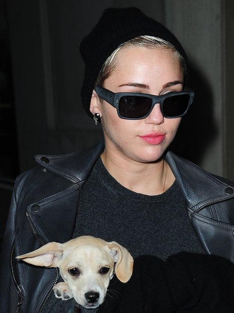 Miley Cyrus and Dog Glasses