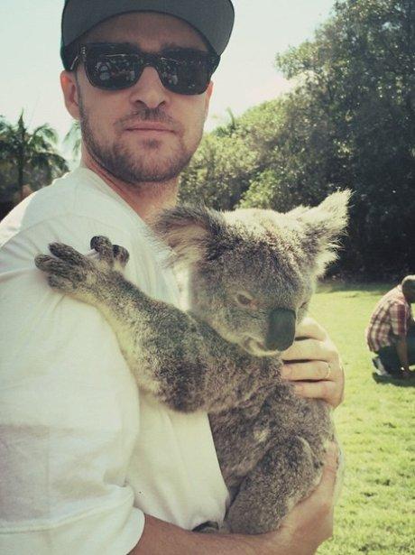 Justin Timberlake with a Koala