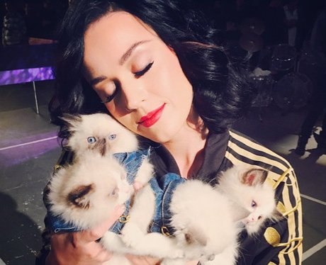 Katy Perry with kittens on instagram