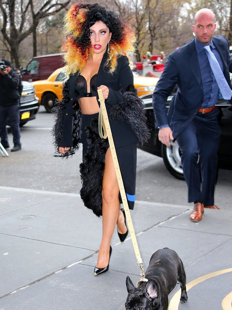 Lady Gaga Multi Couloured Curly Hair Dog