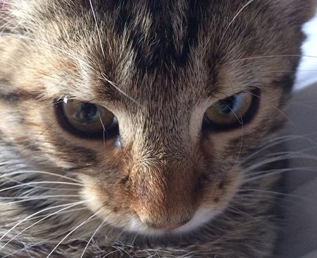 Cat Graham