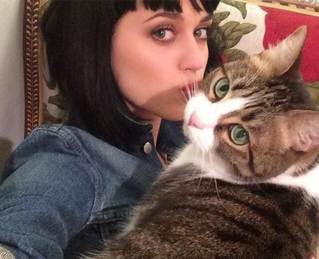 Katy Perry Cat Kitty Purry