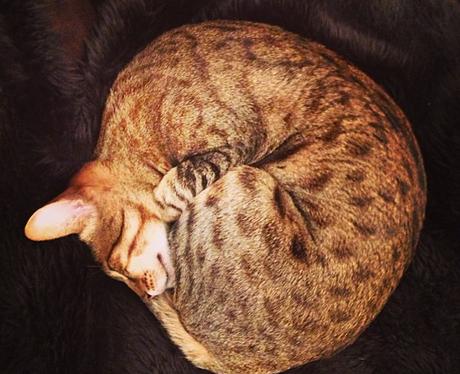 Cat Bruno