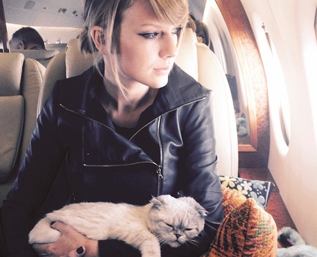 Taylor Swift Cats Meredith And Olivia