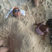 Image 2: Beyonce sand bump instagram