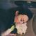 Image 8: Demi Lovato Dog Buddy