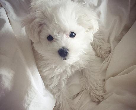 Demi Lovato Dog Buddy