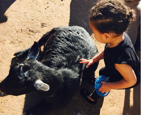 North West at the zoo