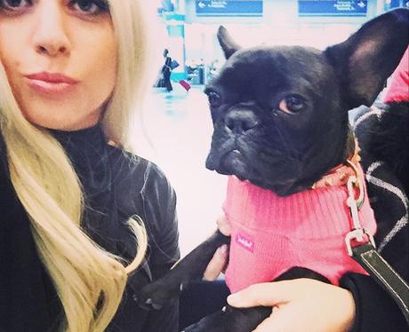 Lady Gaga and Dog