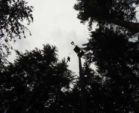 March Of Firsts - Tree Tops