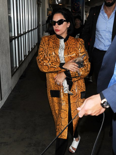 Lady Gaga wearing a snakeskin jacket